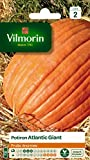 Vilmorin 3860442 Pack de Graines Potiron Atlantic Giant Fruits Enormes
