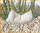 Coussin d'épeautre bio Blanc 40 x 60 cm