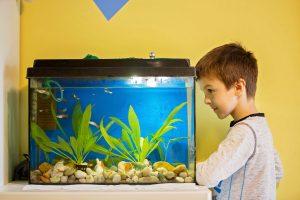 ▷ Avis de chauffage aquarium 1000l pour acheter en ligne -【2021】